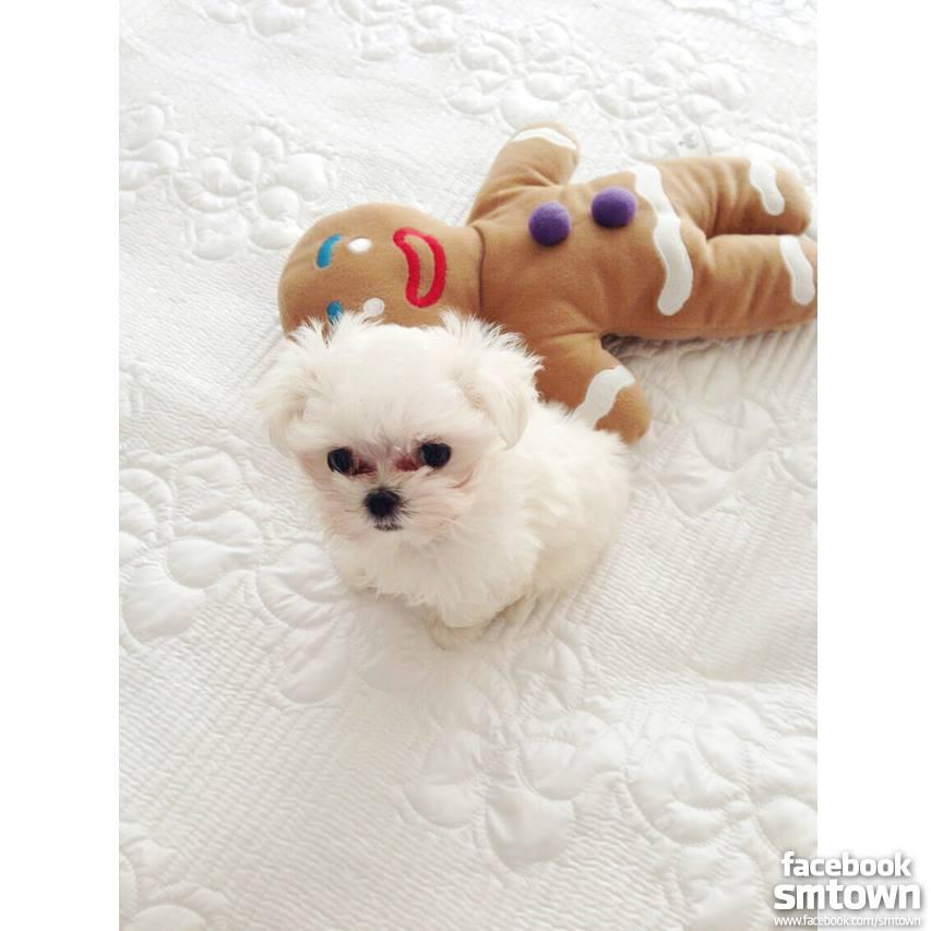 tiff puppy